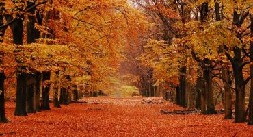 Destinations for fall