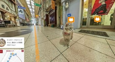 Cat Street View: Discover the World through a Cat's Eyes