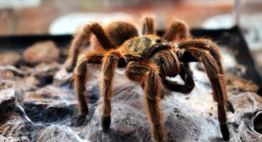 Delta calls off flight after finding Tarantula on-board