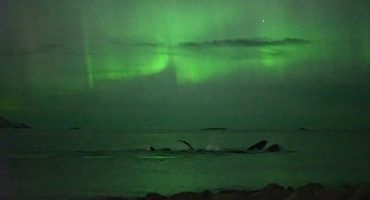 Northern Lights and Whales in Tromso