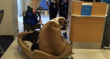 When a dog can afford first class and you can't …