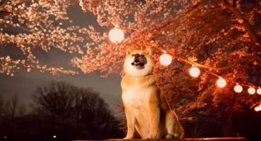 Meet Maru: Japan's new tourism ambassador