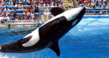 Seaworld to phase out killer whale display in San Diego