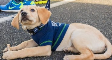 Airports employ dogs for free pre-flying therapy session