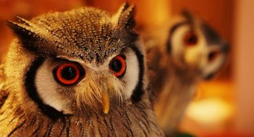 Owl cafes: Japan's hot new trend