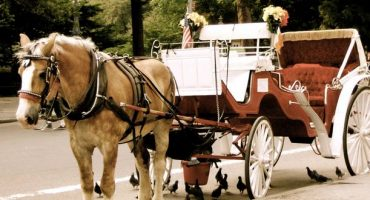 New York's horse-carriage industry is under threat