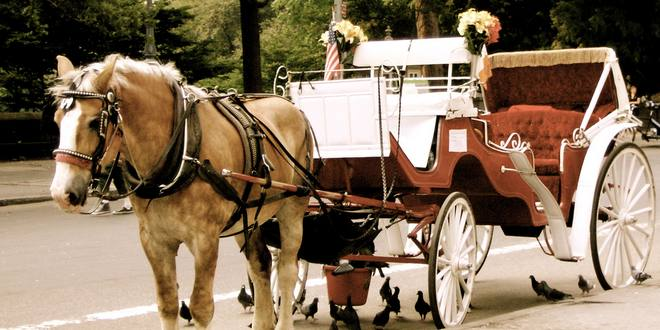 Uber Approved Cars >> New York's horse-carriage industry is under threat ...