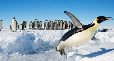Today is Penguin awareness day: the best spots to see them