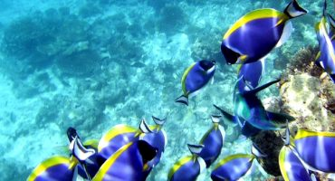 Snorkeling hot spots around the world