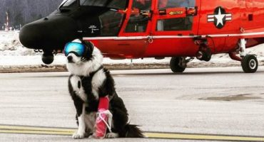 Piper the Runway Patrol Dog becomes internet sensation