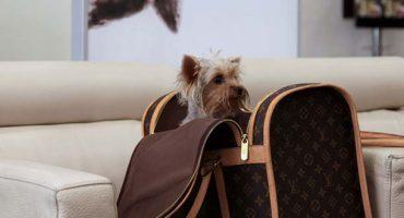 JFK Airport now has a designated doggie restroom