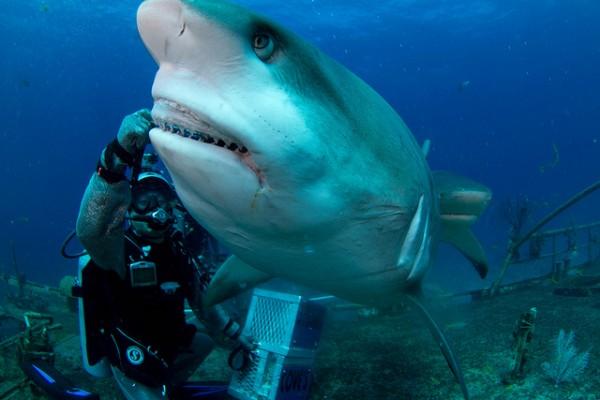 bahamas-reefshark