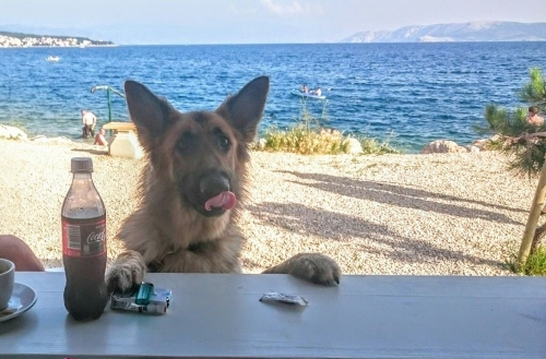 beach bar for dogs in Croatia