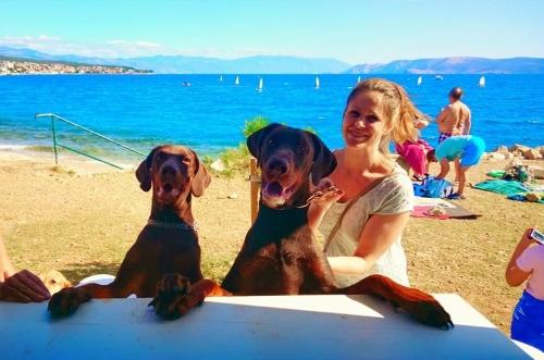 beach bar for dogs in Croatia