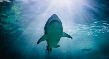 Top 7 places to swim with sharks