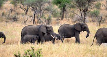 TripAdvisor Bans Sales to Certain Wildlife Attractions