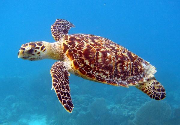 Sandy Point turtle