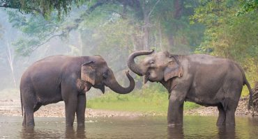 Where To Ethically Visit Elephants In Thailand