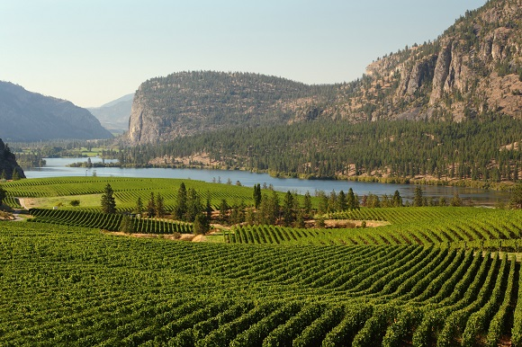 Okanagan Valley Vineyard, British Columbia