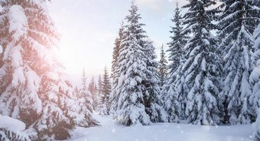 Forecasts Predict Late And Short Winter Season